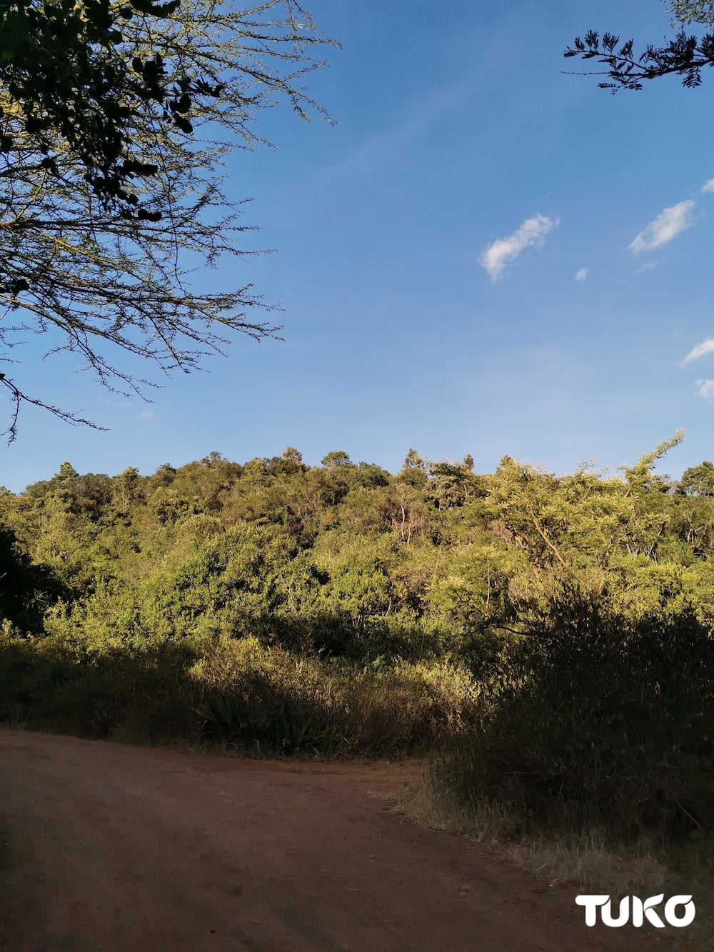 5 magical spots in Nairobi fit for first romantic dates