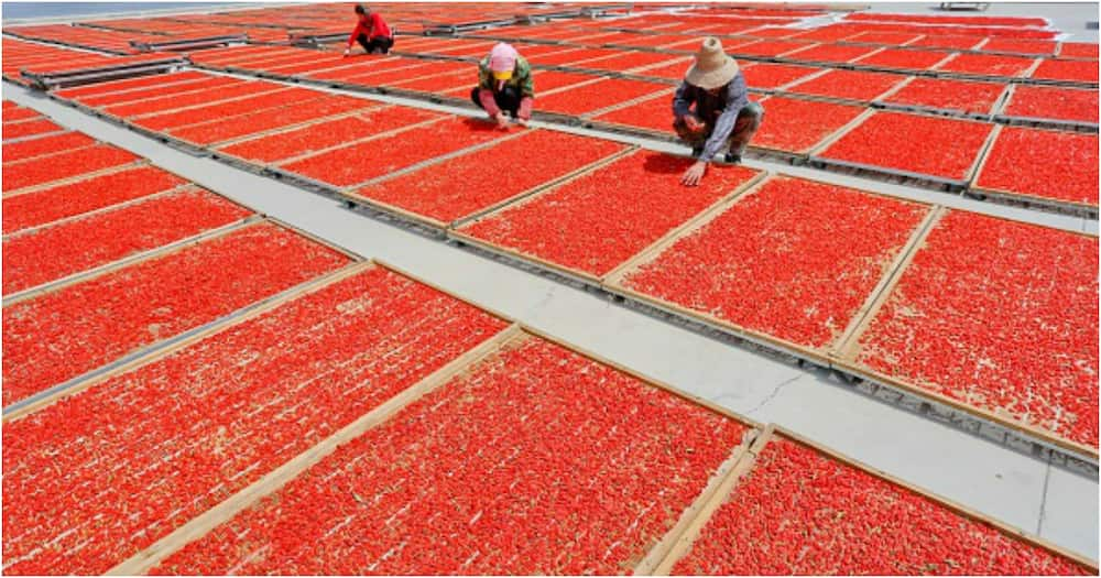 Goji berry: The fruit that reportedly keeps Asians looking young