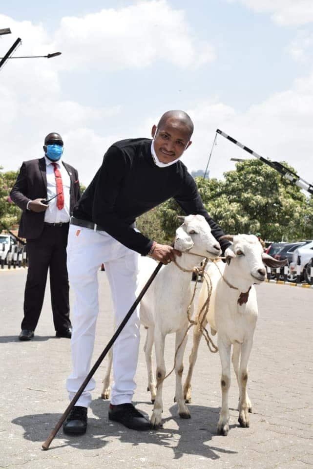 Babu Owino apewa zawadi ya mbuzi, awaita Uhuru na Raila