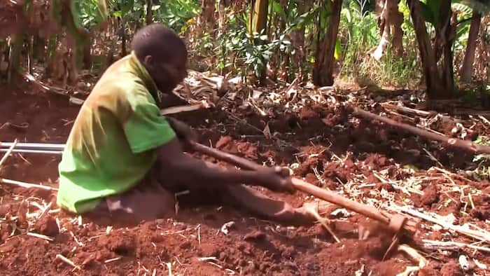 Murang'a: Physically Impaired Man Who Tills People's Land While Seated Requests Help with Artificial Limb