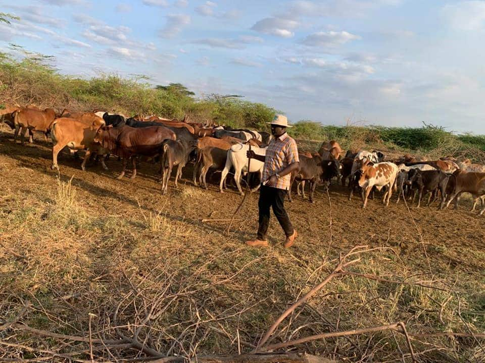 DP Ruto aende mashambani baada ya Uhuru kutangaza likizo