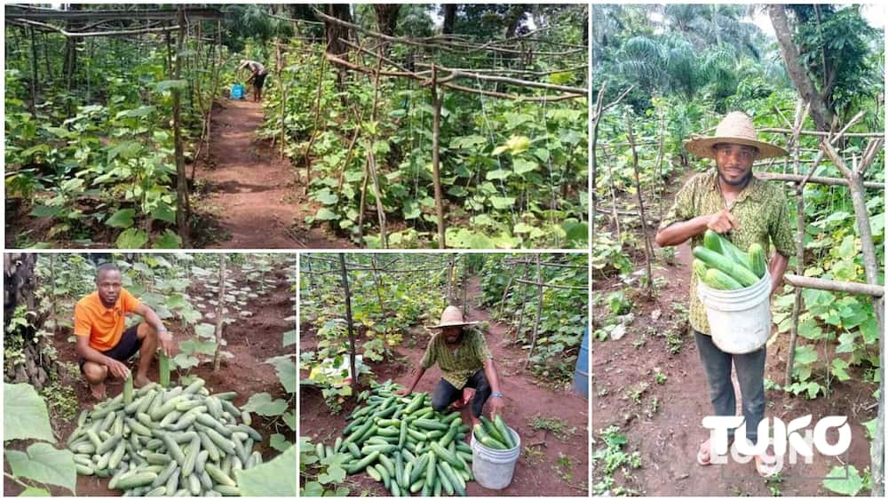 The young Nigerian farmer succeeded despite friends not believing in him.