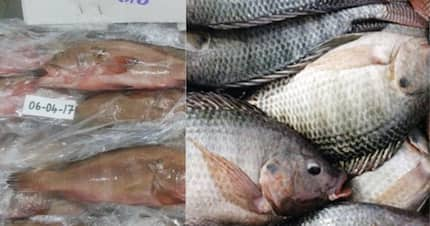 Lab test reveals fish imported from China contaminated with heavy metals