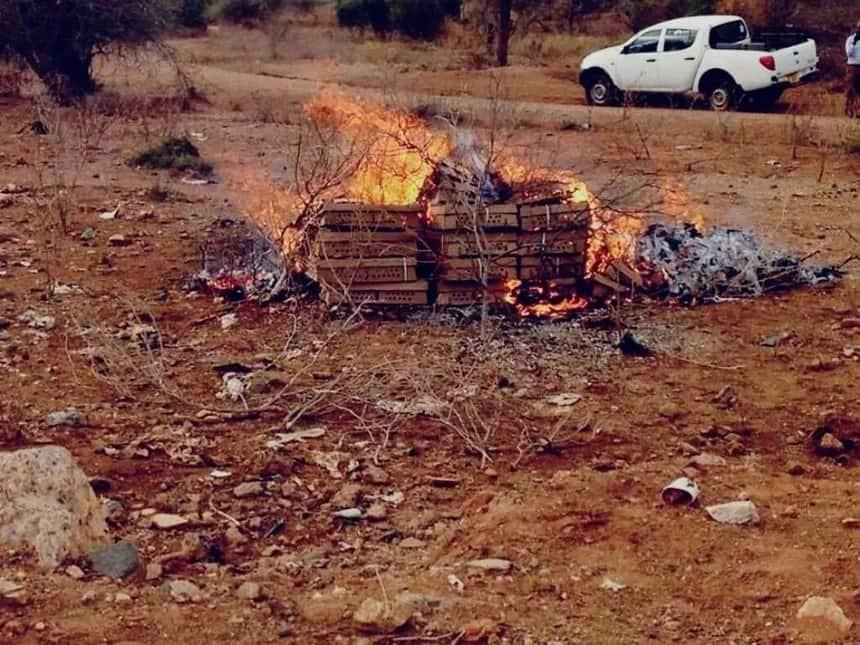 Tanzania burns KSh 0.5 million worth of chicks from Kenya again