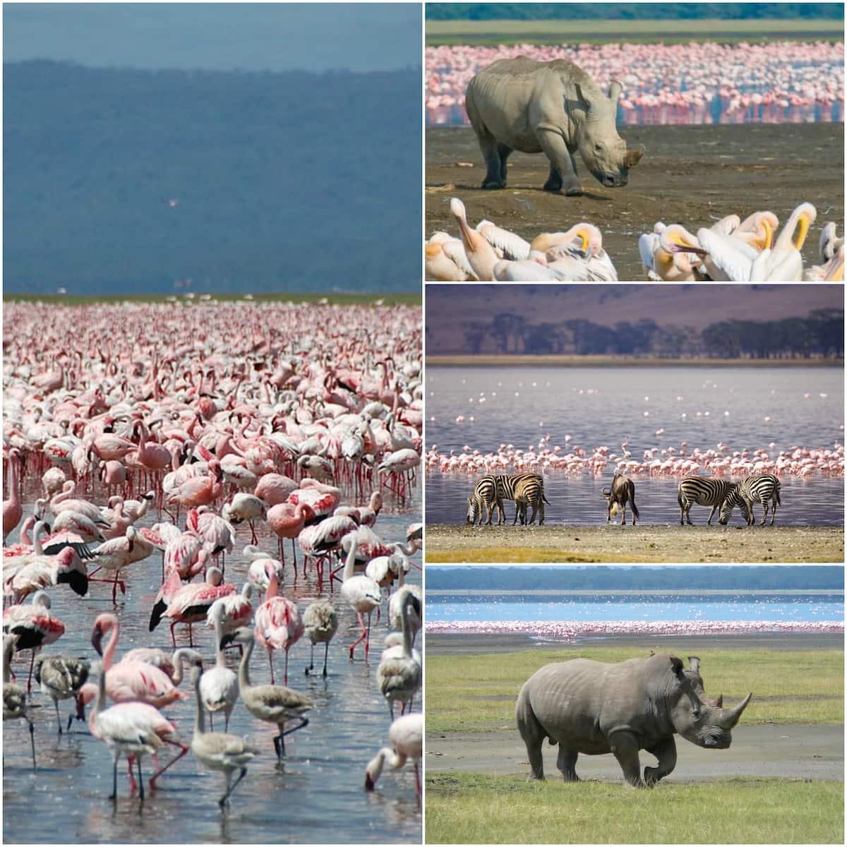 Main tourist attractions in Kenya