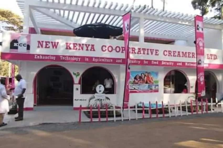 How to start dairy farming in Kenya?