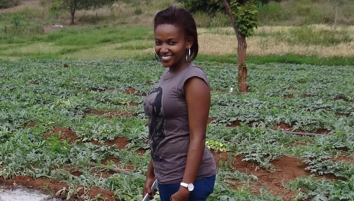 successful watermelon farming in kenya,benefits of watermelon, watermelon farmers in kenya