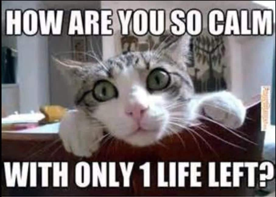 Funny memes of cats