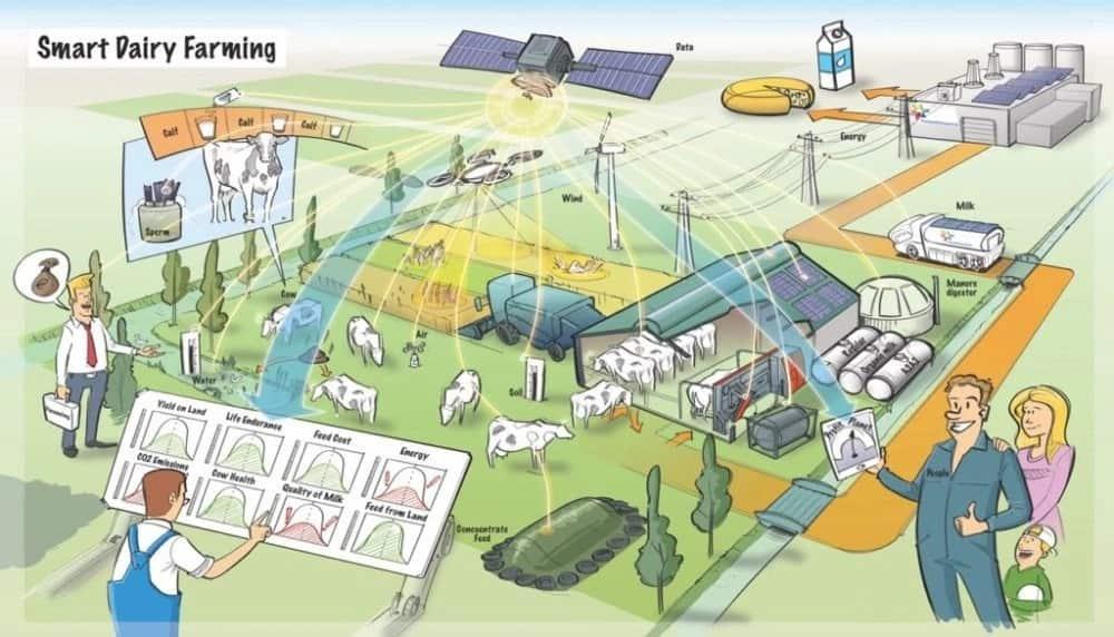 kenya dairy farming