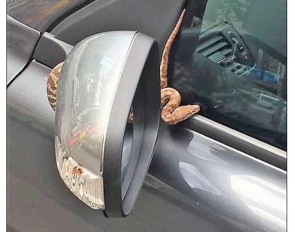 Python jumps on car's FRONT WINDOW as woman drives through a an urban street (photos, video)