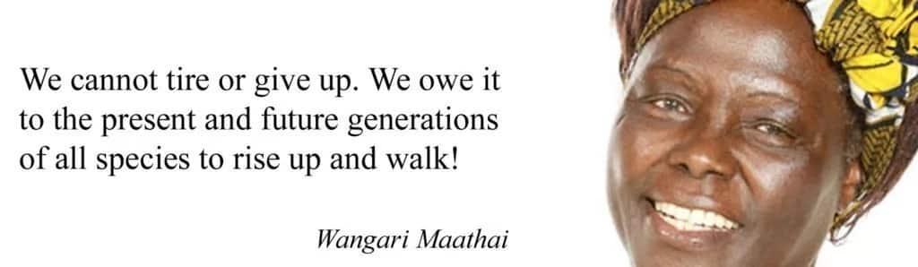 Quotes wangari maathai, Dr. wangari maathai quotes, Wangari muta maathai quotes