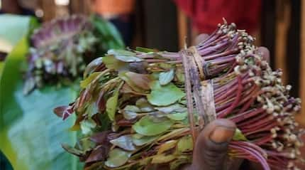 Mandera village elders ban wives to miraa sellers from returning to the village
