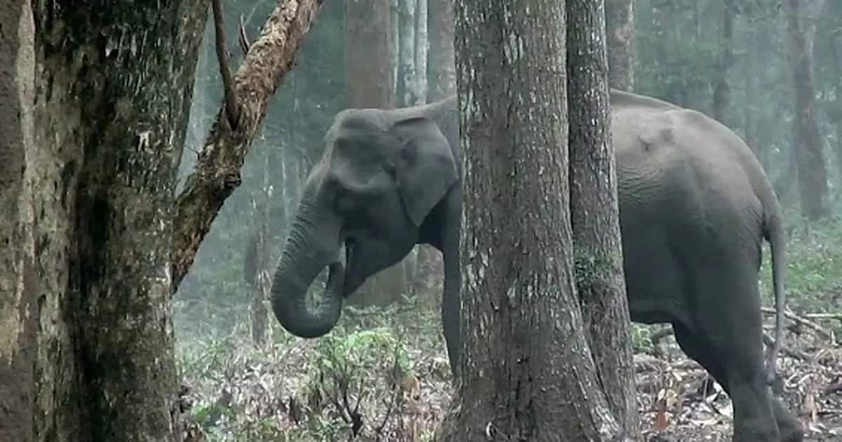 Smoking Elephant stuns scientists and we are stunned too
