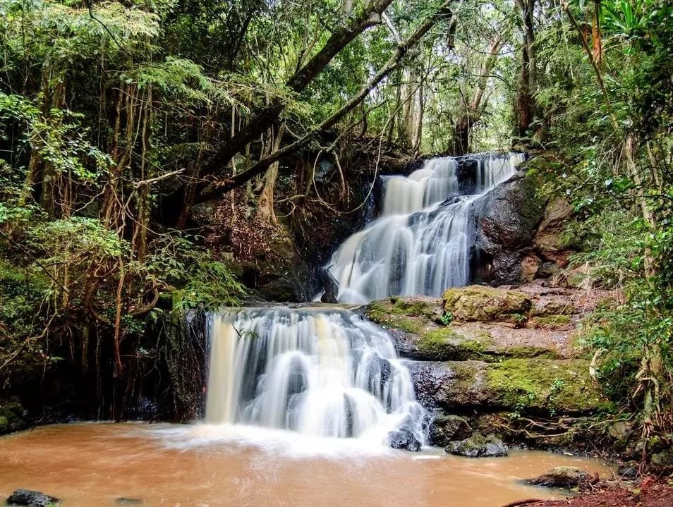 Karura Forest Activities: Discover What You Can Do in Karura Forest