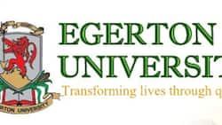Best Egerton University diploma courses