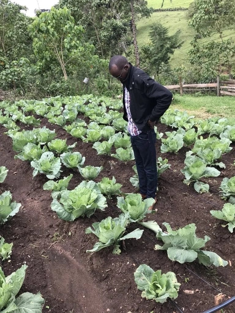 High unemployment rate in Kenya due to youth giving agriculture wide berth - UNDP report