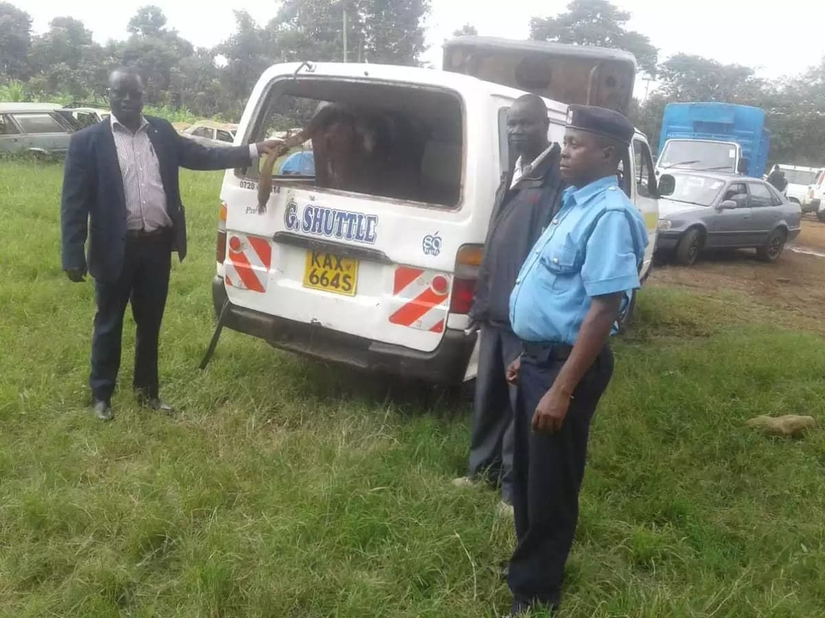 Murang'a police recover KSh 90,000 stolen cow being ferried in 14 seater matatu