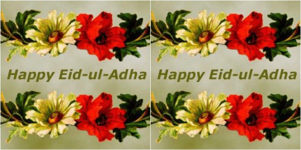 eid al adha wishes for sms eid al adha wishes and quotes eid al adha wishes message