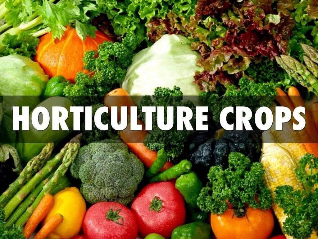 Horticulture in Kenya guide