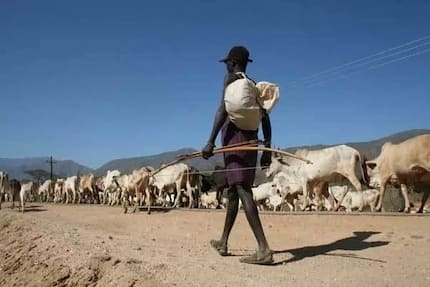 A day in the life of 24-year-old Pokot bandit with 8 years of experience