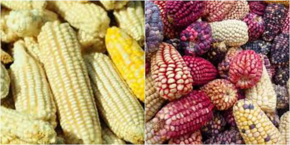 Magufuli bans selling of food to Kenya
