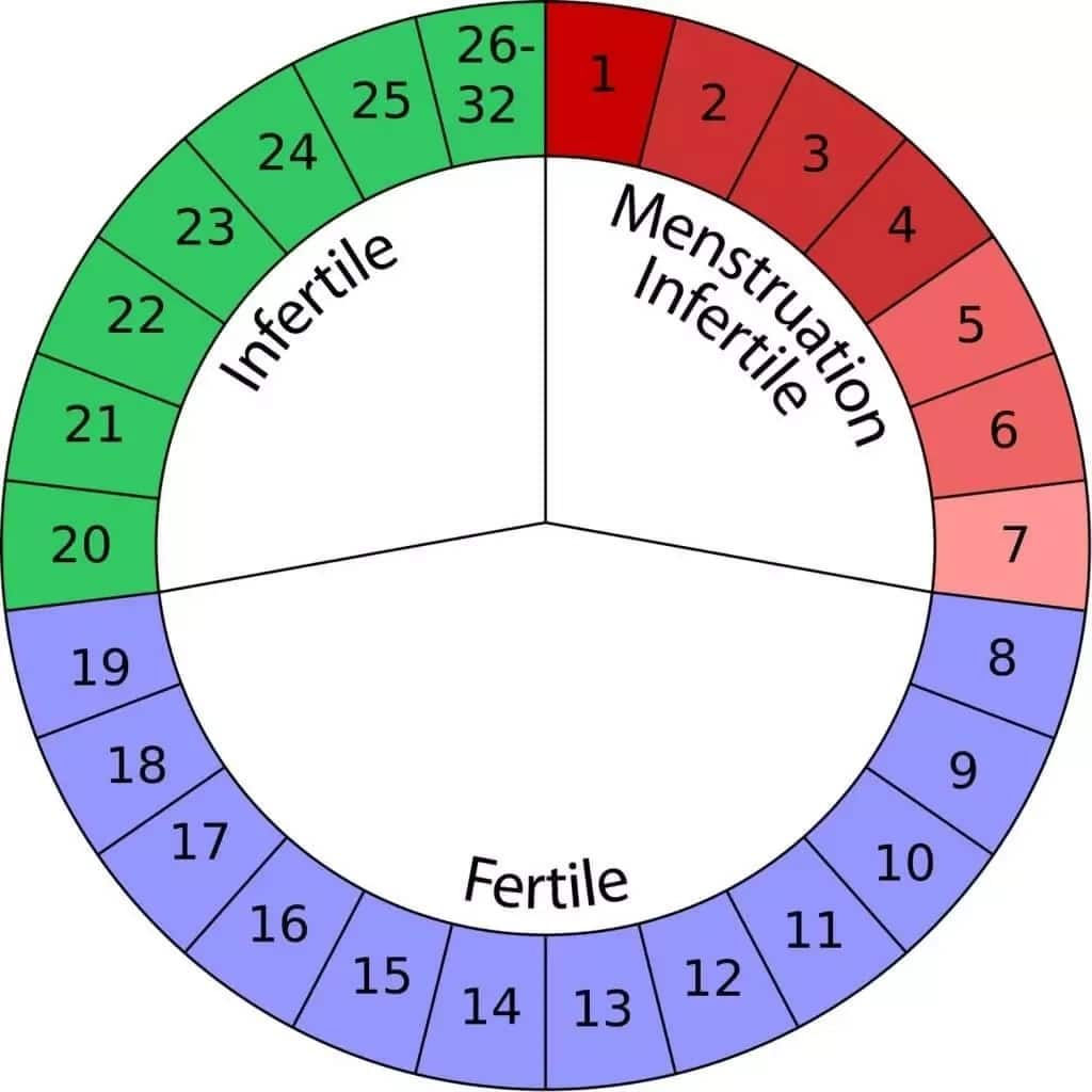 Safe Period Calculator to Avoid Pregnancy
