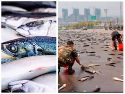 Confusion as fish fall from sky amid rain and only scientists can explain why