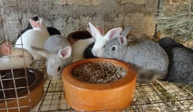 About rabbit farming in Kenya,Success stories on rabbit farming in Kenya,commercial rabbit farming in kenya