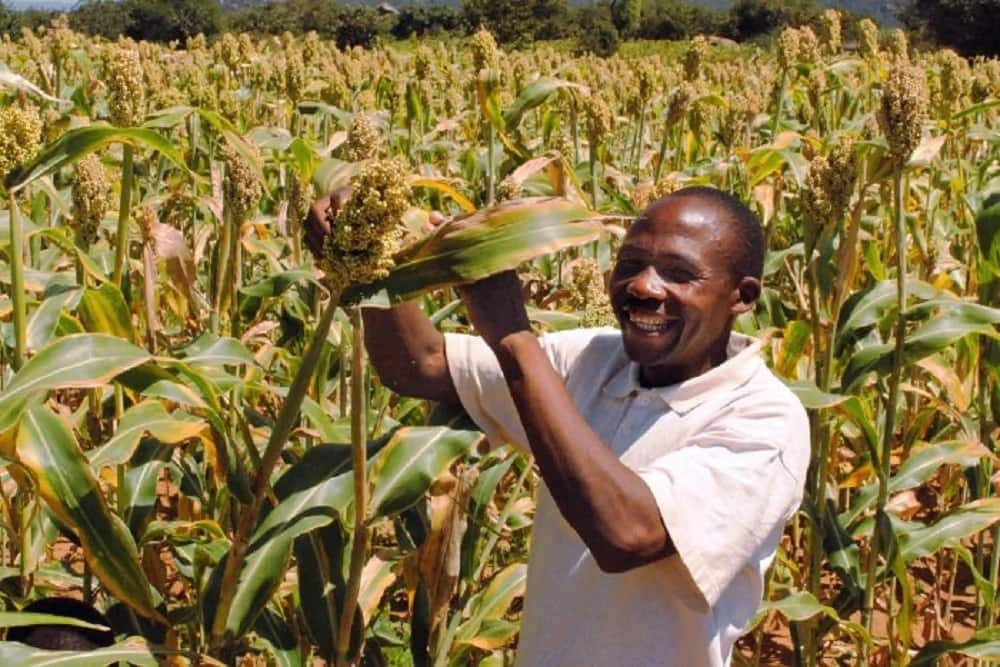 Agribusiness in Kenya. List of top ideas which agribusiness to start