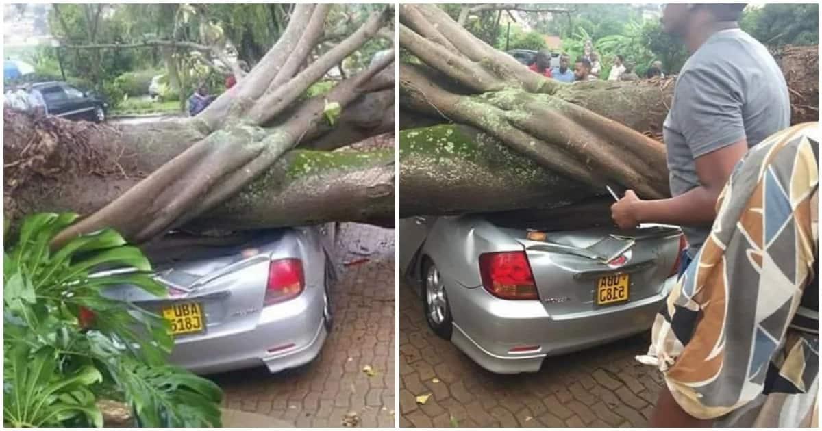 Tree falls on cars at church parking lot following heavy rains