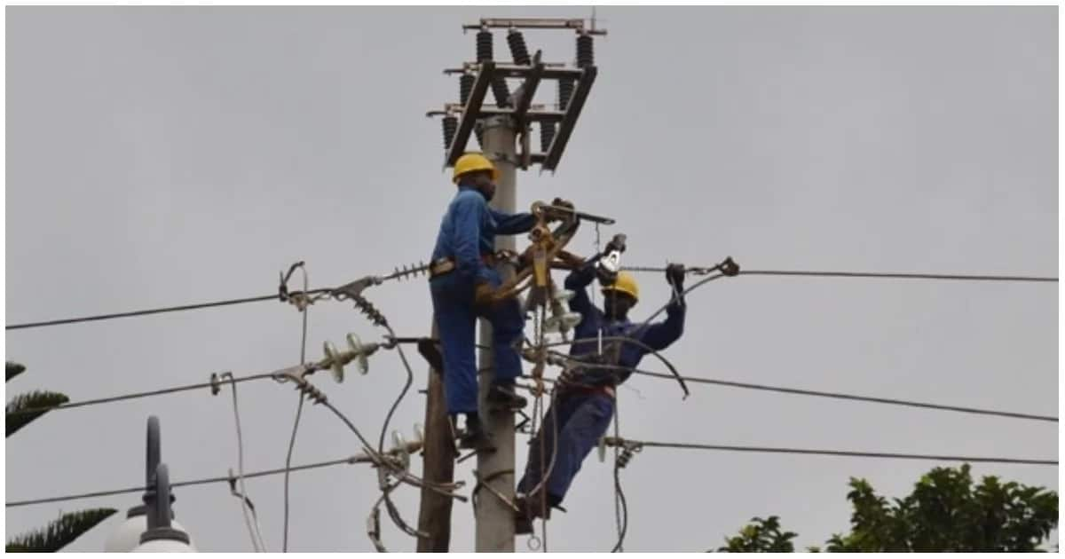 Kenya Power to pay farmer KSh 1.3 million after her 2 cows were electrocuted