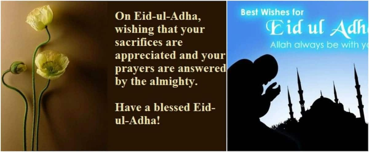eid al adha wishes and quotes eid al adha wishes message eid al adha wishes images