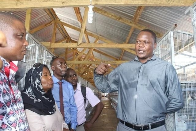 rabbit keeping in kenya,Success stories on rabbit farming in Kenya,commercial rabbit farming in kenya