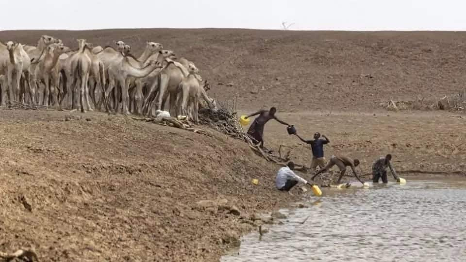 Impacts of drought in Kenya Effects of drought in Kenya Images of drought in Kenya