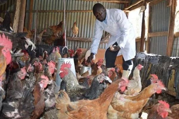Poultry farming in Kenya 2018
