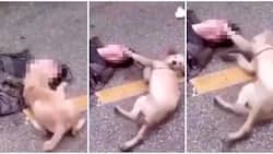 Loyal pet dog tries to wake up its owner after he passed out on the street