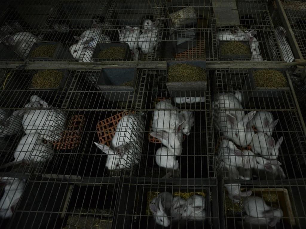 Success stories on rabbit farming in Kenya,commercial rabbit farming in kenya,Rabbit contract farming