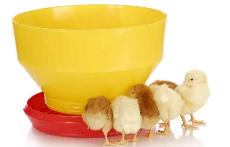 kienyeji chicken house designs kienyeji chicken house design in kenya kienyeji chicken house chicken house plan