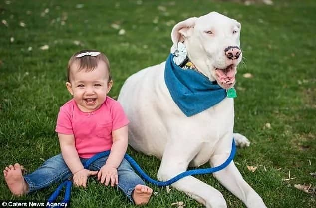 Extraordinary bond! Video of cute toddler walking blind puppy is the best thing you will ever watch