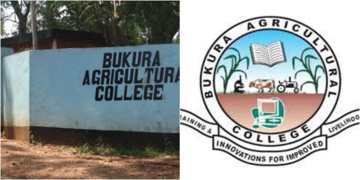 Bukura agricultural college Bukura agricultural college application form Bukura agricultural college fee structure