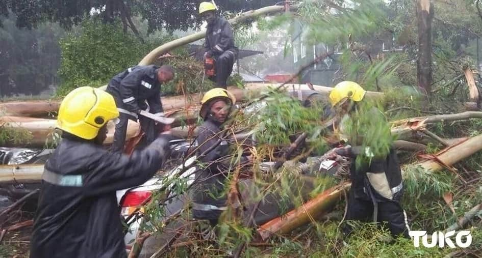 Huge eucalyptus tree falls destroying posh cars at Nairobi's Serena Hotel parking lot