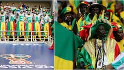 Russian police conduct sweep on Senegal fans after excessive celebration apparently rouses suspicion