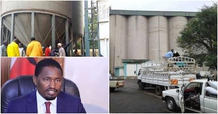 Cereals board wastes KSh 1.8 billion through poor maize storage