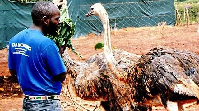 Success stories of poultry farming in Kenya