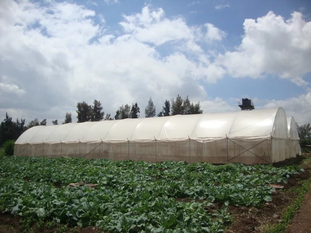 Simple Green Houses In Kenya
