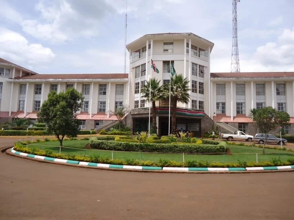 KUCCPS Moi University admission letters 2019 ▷ Tuko co ke
