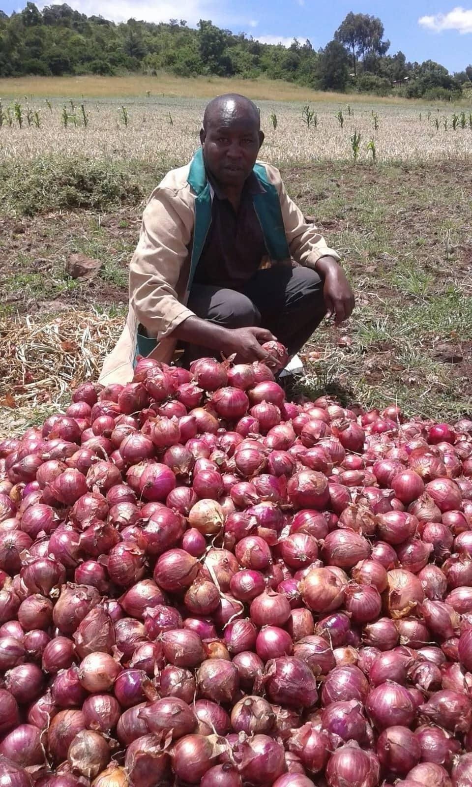 Greenhouse onion farming in Kenya