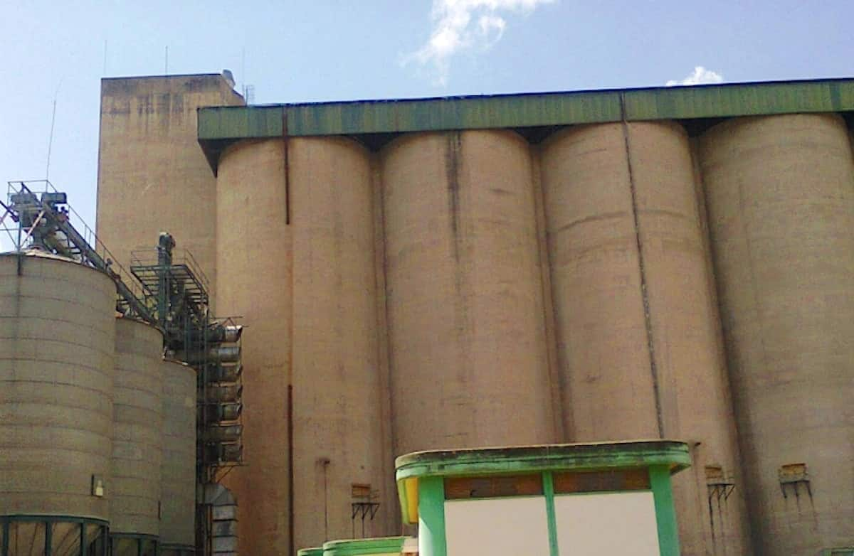 Maize worth KSh 11.5 billion rotting in National Cereals and Produce Board silos