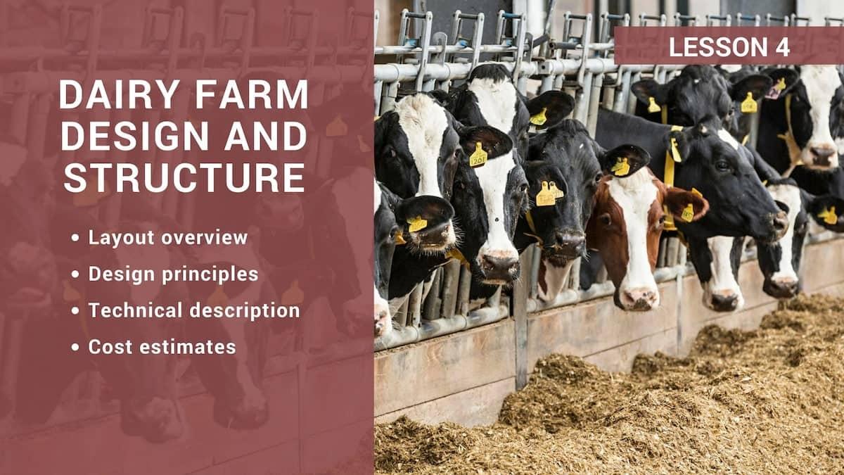 Dairy farm design and structure ▷ tuko co ke