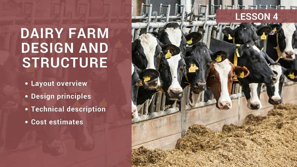 Dairy Farm Design And Structure Tuko Co Ke
